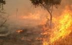 Şemdinli'de top atışları, orman yangını