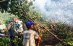 Şemdinli'de orman yangını kontrol altına alınıyor