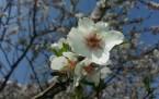 Şemdinli'nin 'Bahar' Yüzü
