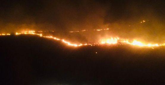 Diyarbakır Ergani'de orman yangını