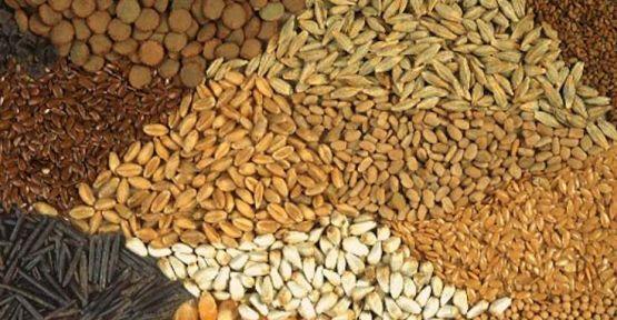 Korona döneminde tohum fiyatlarına yüzde 20 zam