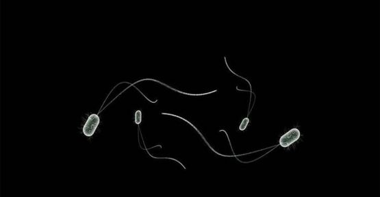 Oksijensiz yaşayan canlı keşfedildi