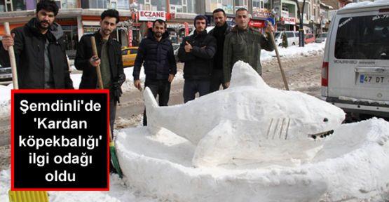 Şemdinli'de 'Kardan köpekbalığı' ilgi odağı oldu