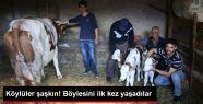 Eskişehir'in Seyitgazi İlçesinde Bir...