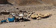 Hakkari'de 201 hayvan şarbondan öldü