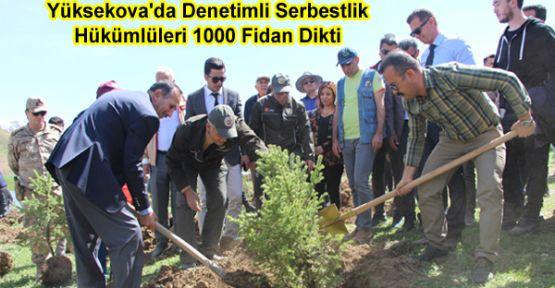 Yüksekova'da Denetimli Serbestlik Hükümlüleri 1000 Fidan Dikti