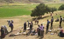 Yüksekova'da yıldırım isabet eden 30 koyun öldü