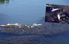 Yüksekova'da balık ölümleri endişe yarattı