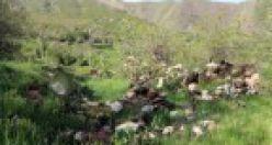 Fotoğraflarla Ormancık (Bêgalte) Köyü