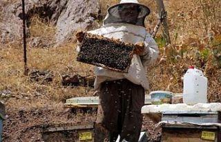 Üniversite mezunu kadın arıcı, 70 arı kovanından...