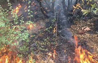 Şemdinli'deki orman yangını kısmi olarak...