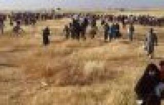 DAİŞ çeteleri 100'e yakın sivili katletti