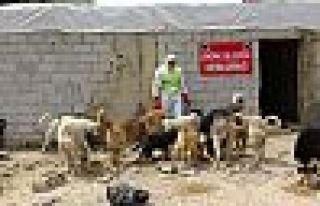 Şemdinli Belediyesi sokak hayvanları unutmadı