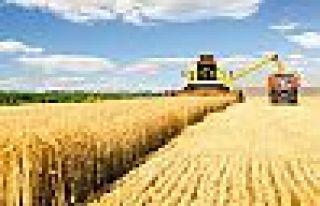 TMMOB: Gıda krizi ortaya çıkabilir