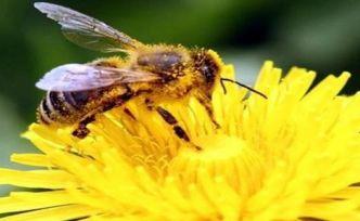Arılar toplama ve çıkarma işlemi yapabiliyor