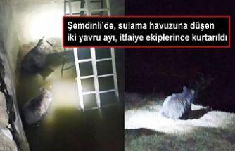 Şemdinli'de, sulama havuzuna düşen iki yavru ayı, itfaiye ekiplerince kurtarıldı