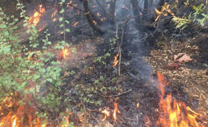 Şemdinli'deki orman yangını kısmi olarak kontrol altına alındı